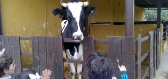 Infantil en la granja-escuela