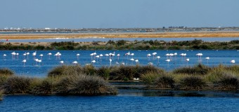 DOÑANA, PARQUE NATURAL
