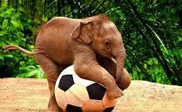 Descripción de animales: Los elefantes.
