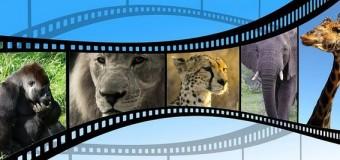Curiosidades sobre animales