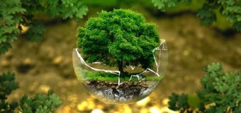 El Medio Ambiente en peligro