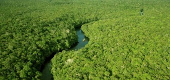 Arrestan en Brasil a un Talador de Árboles de la Selva