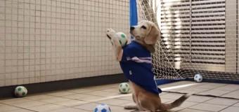 Purín, el perro que para los balones