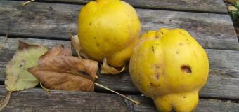 Frutilandia de temporada